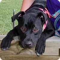 Terrier (Unknown Type, Medium) Mix Puppy for adoption in Midlothian, Virginia - Michone