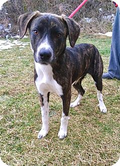 Hound (Unknown Type) Mix Dog for adoption in Lafayette, New Jersey - Dallas