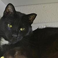 Adopt A Pet :: Ichabod - Akron, OH