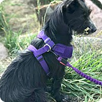 Adopt A Pet :: Carly-ADOPTION PENDING - Boulder, CO