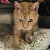 Adopt A Pet :: Karen - Chestertown, MD