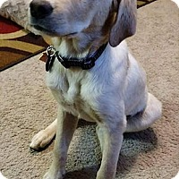 Adopt A Pet :: Snow - Buckeystown, MD