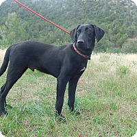 Adopt A Pet :: Jet - Ridgway, CO