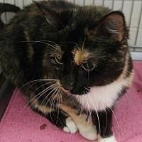 Adopt A Pet :: Reeses - Muscatine, IA