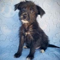 Adopt A Pet :: Missy - Fredericksburg, TX