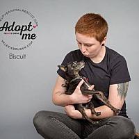 Adopt A Pet :: Biscuit - Mount Laurel, NJ