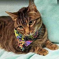 Adopt A Pet :: Feral Fawcett - Gahanna, OH