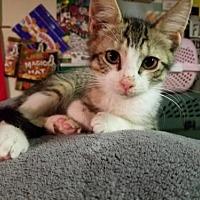 Adopt A Pet :: Aspen - Oakhurst, NJ