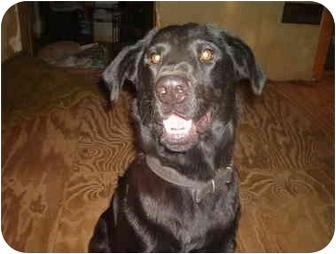 Labrador Retriever Mix Dog for adoption in North Jackson, Ohio - Jackson
