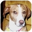 Photo 3 - Beagle Mix Dog for adoption in Northville, Michigan - Tucker - Pending