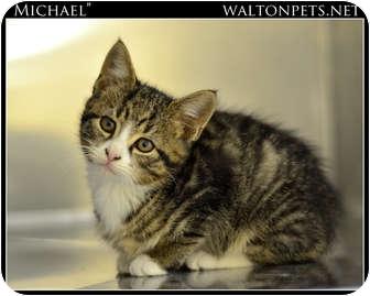 Domestic Shorthair Kitten for adoption in Monroe, Georgia - Michael