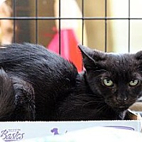 Adopt A Pet :: Sparkie - New York, NY