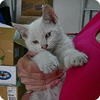 Adopt A Pet :: Twinkie n Twitter - lake elsinore, CA