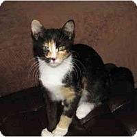 Adopt A Pet :: Peaches - Mount Laurel, NJ