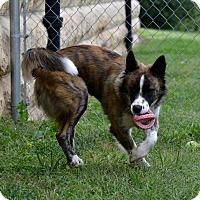 Adopt A Pet :: Mac - Fort Riley, KS