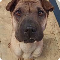 Adopt A Pet :: Naya in TX - pending - Apple Valley, CA