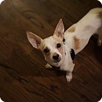 Adopt A Pet :: Penguin - Chicago, IL