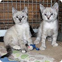 Adopt A Pet :: Nick - Prospect, CT