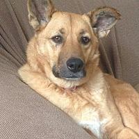 Adopt A Pet :: Junie B. Jones - Fishers, IN