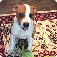 Adopt A Pet :: Collins pending adoption - East Hartford, CT