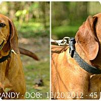 Adopt A Pet :: Brandy - Siler City, NC