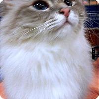 Adopt A Pet :: DIVINA - Powder Springs, GA