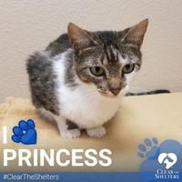 Adopt A Pet :: Princess - Grapevine, TX