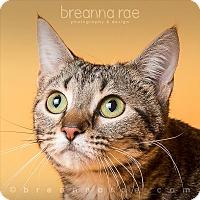 Adopt A Pet :: Marla - Sheboygan, WI