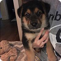 Adopt A Pet :: Fiona - Greeneville, TN