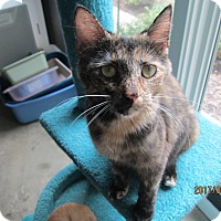 Adopt A Pet :: Dolly - Jeffersonville, IN