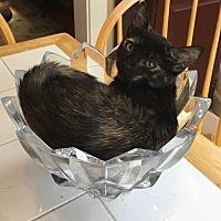 Adopt A Pet :: Julep - Covington, KY