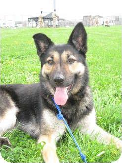 Shepherd (Unknown Type) Mix Dog for adoption in LaGrange, Kentucky - Wrenna