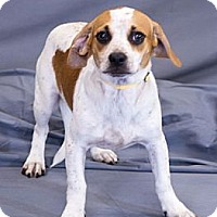 Adopt A Pet :: Flash - Crescent, OK