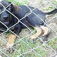 Adopt A Pet :: Precious-Reduced Fee $175 - Bel Air, MD