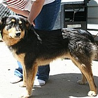 Adopt A Pet :: Sam - Alliance, NE