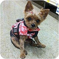 Adopt A Pet :: Dorothy - Fairfax, VA