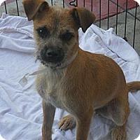 Adopt A Pet :: Holmes - Poway, CA