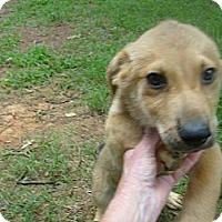 Adopt A Pet :: Portly - Eden, NC