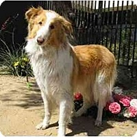 Adopt A Pet :: Jillian - Gardena, CA