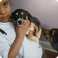 Adopt A Pet :: Cash - Cincinnati, OH