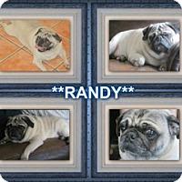 Adopt A Pet :: Randy - Walled Lake, MI