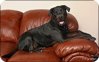 Labrador Retriever/Rottweiler Mix Dog for adoption in Las Vegas, Nevada - Cammie