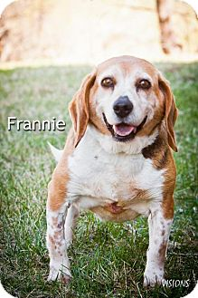 Beagle Mix Dog for adoption in Cedar Rapids, Iowa - Frannie