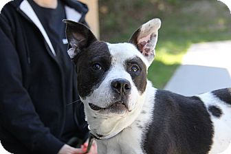 Terrier (Unknown Type, Medium) Mix Dog for adoption in Brookhaven, New York - Chloe