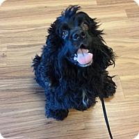 Adopt A Pet :: FELIX - Wilmington, NC