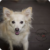 Adopt A Pet :: Bella and Foxxy - Houston, TX