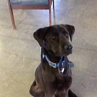 Adopt A Pet :: Dunn - Wattertown, MA