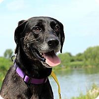 Adopt A Pet :: Xoe - Austin, TX