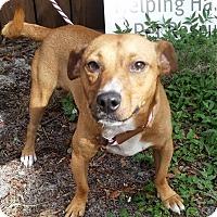 Adopt A Pet :: Blake - Gainesville, FL