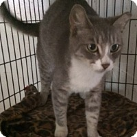 Adopt A Pet :: Miss Purrtee - Cocoa, FL